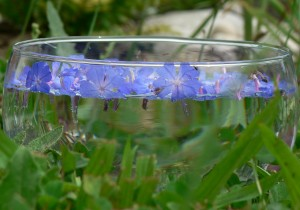 fleurs-bach-grenoble-cerato-solarisation